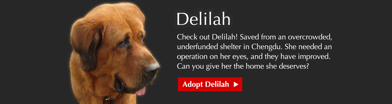 Adopt Delilah