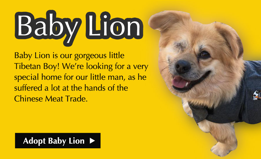 Adopt Baby Lion