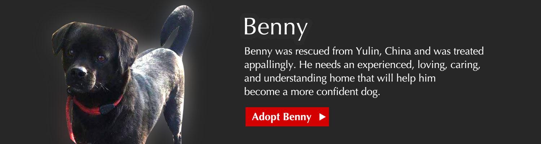 Adopt Benny
