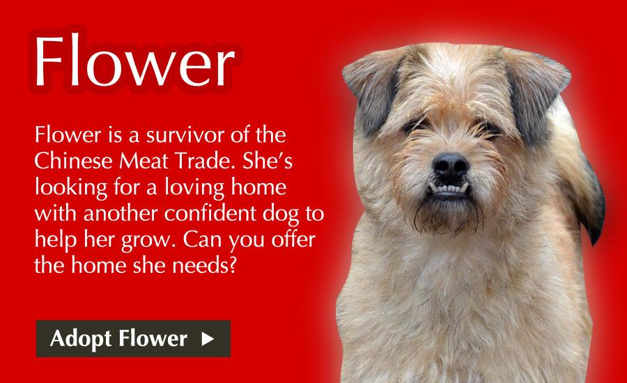 Adopt Flower