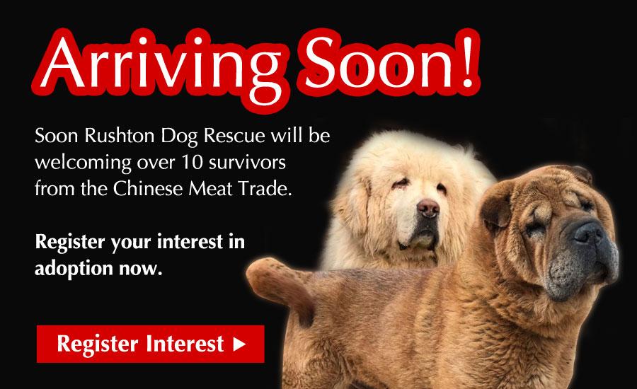 Arriving Soon! Register your interest in adoption!