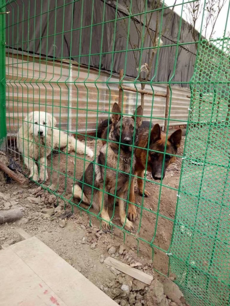 Dog Rescue in China