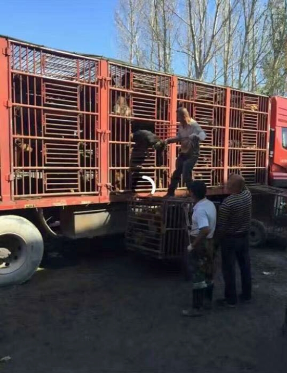 Darkness to Light - China Meat Trade Lorry with Dogs