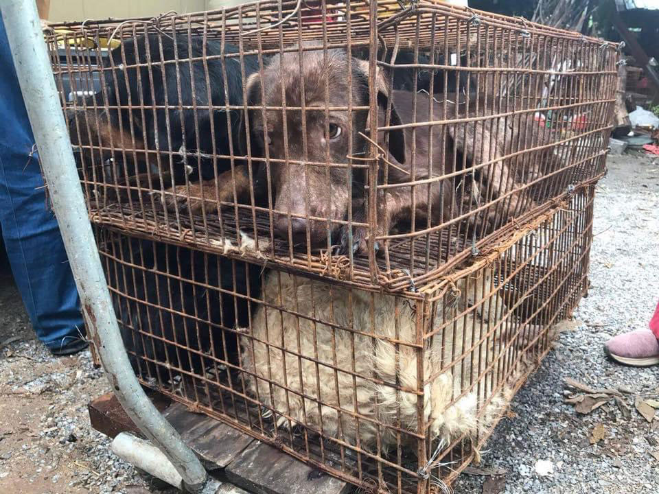 China - Dog in a cage