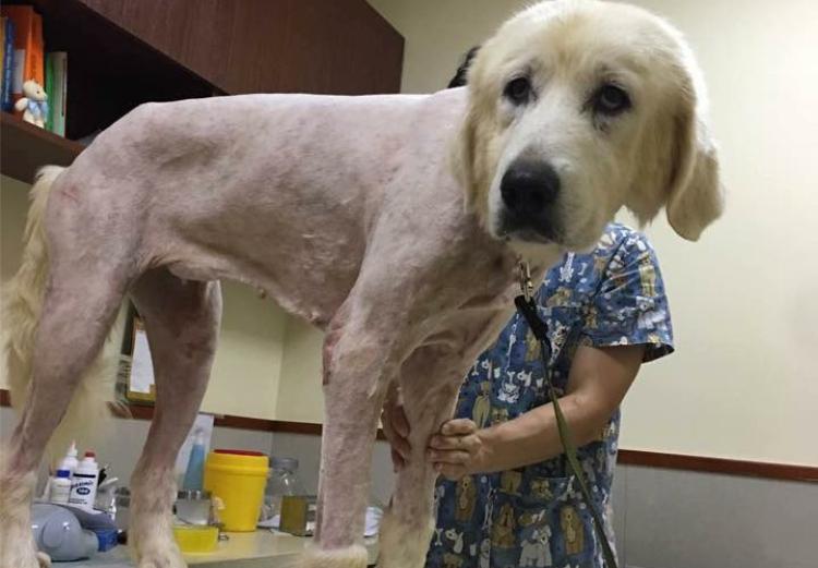 Fern - China Rescue Dog