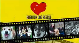 Rushton Dog Rescue Helping Dogs To Safety Adopt A