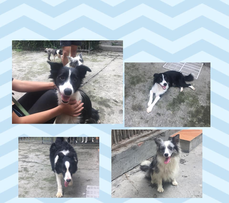 A selection of the dogs we have waiting in China