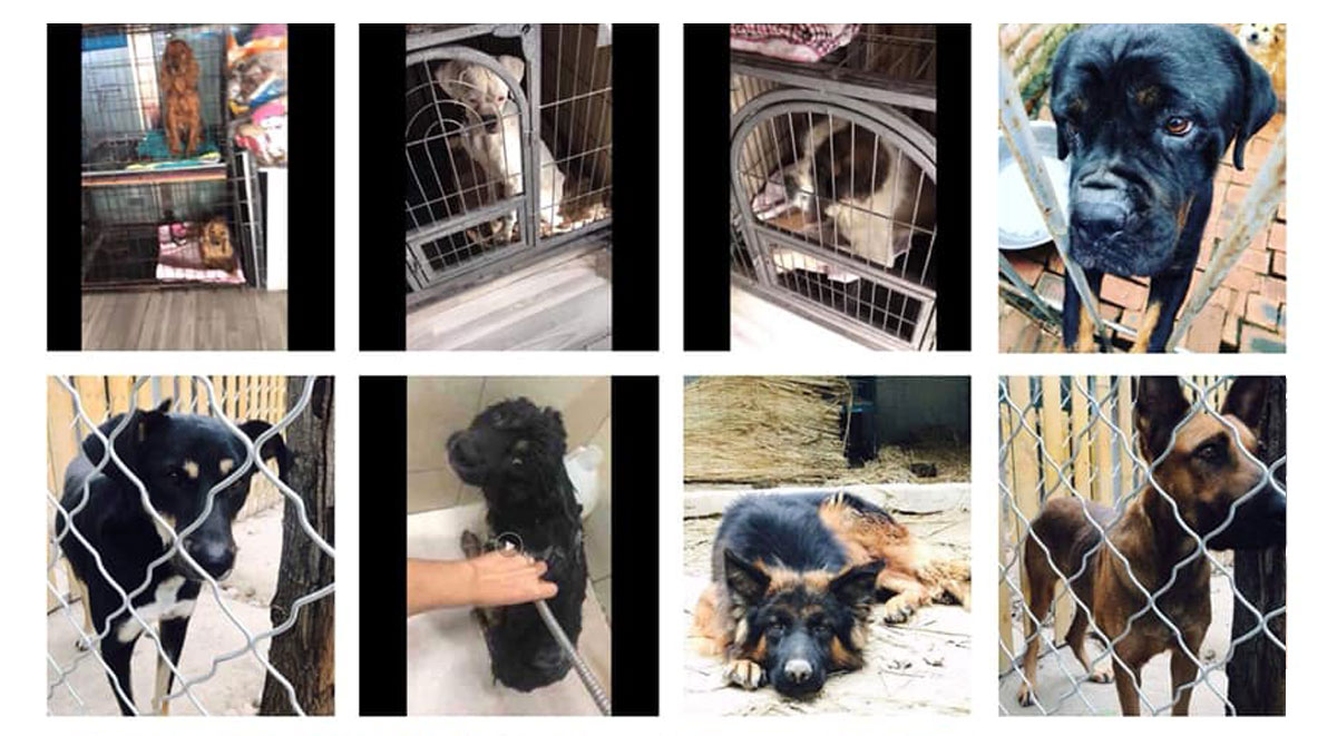 Some of our dogs still in China