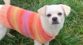 Angelina the little cross breed dog in a pinky jacket!